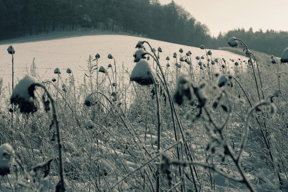 Winter-Landschaft-Elbsandsteingebirge